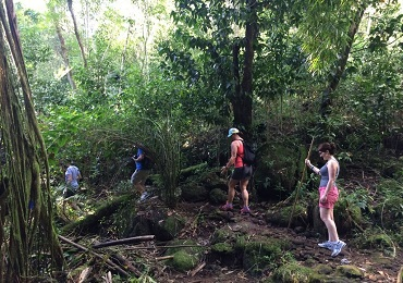 Product Hawaiian Waterfall Hike