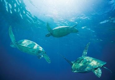 Hilton Turtle Reef Snorkel image 3
