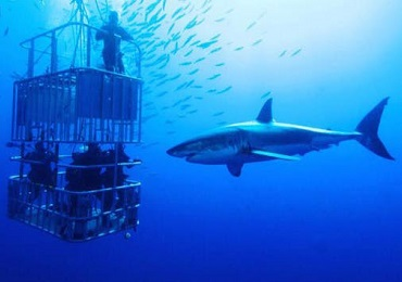 Product Shark Dive & 1 Surf Bus Activity