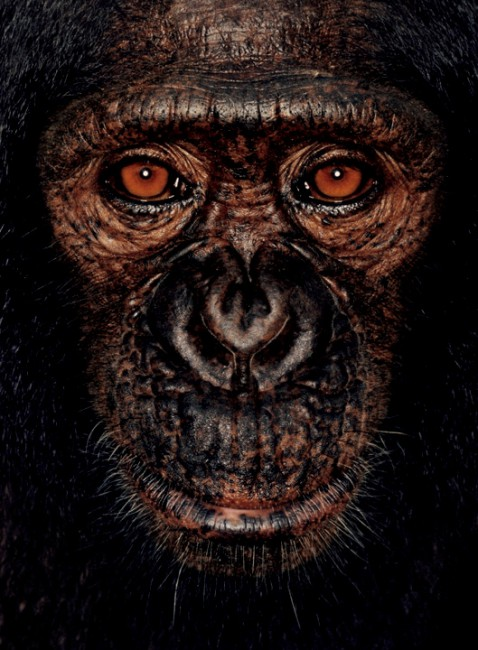 ©James Mollison, courtesy of Chris Boot, </span><span><em>James from James and the Other Apes, 2001</em>