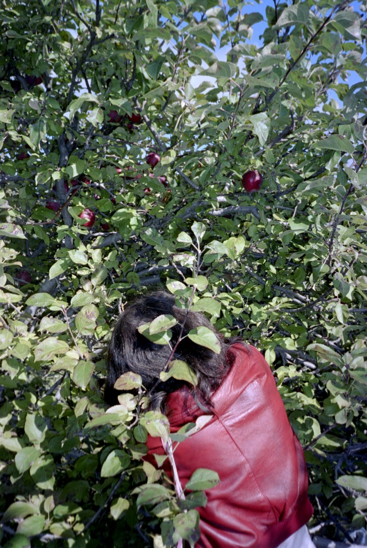 Ryan Foerster, Glenna picking apples, 2004, c print, 16 1/2  x 24
