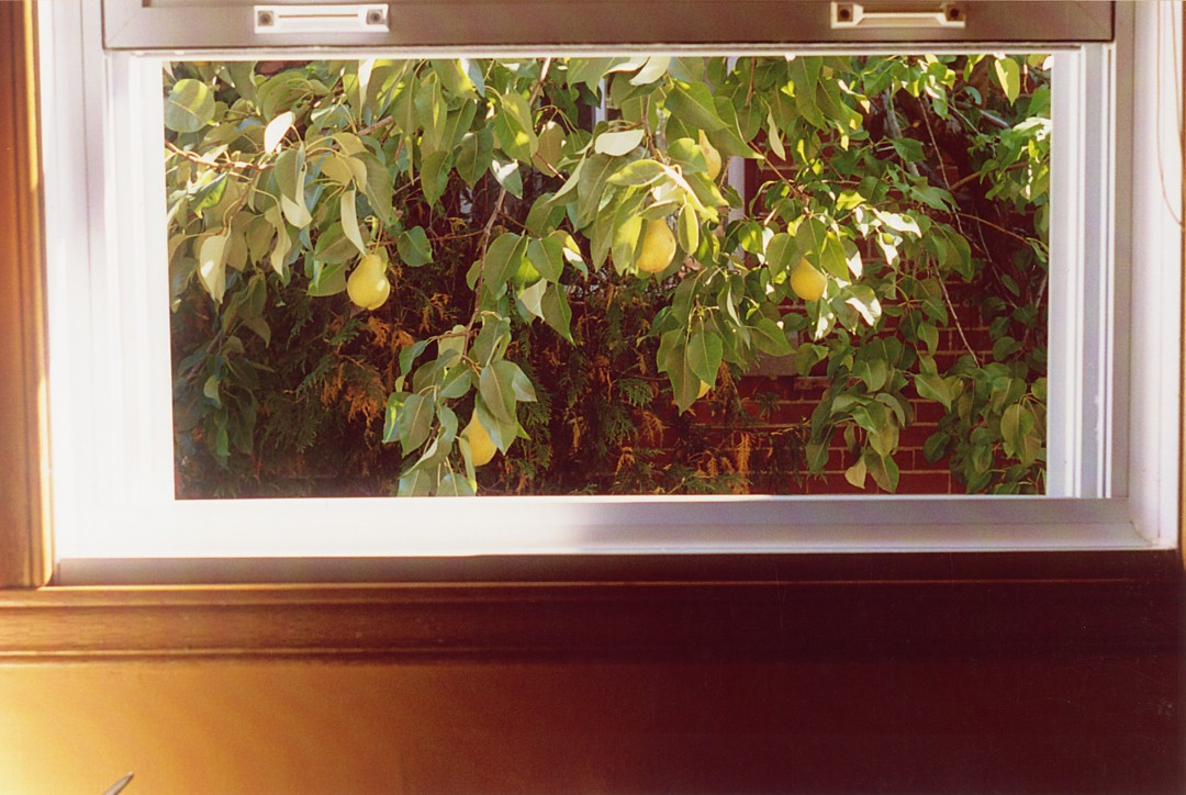 Oliver Lamm, </span><span><em>Pears, 2003</em>, </span><span>35mm,colour film