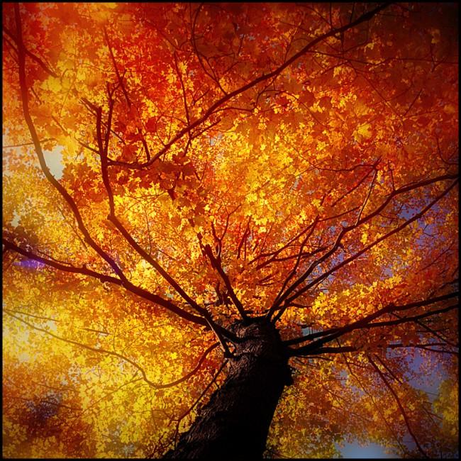 Toni Wallachy, </span><span><em>Fall Glory</em>, </span><span>35mm