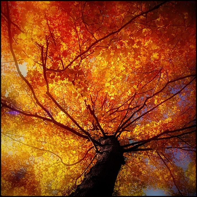 Toni Wallachy, Fall Glory, 35mm