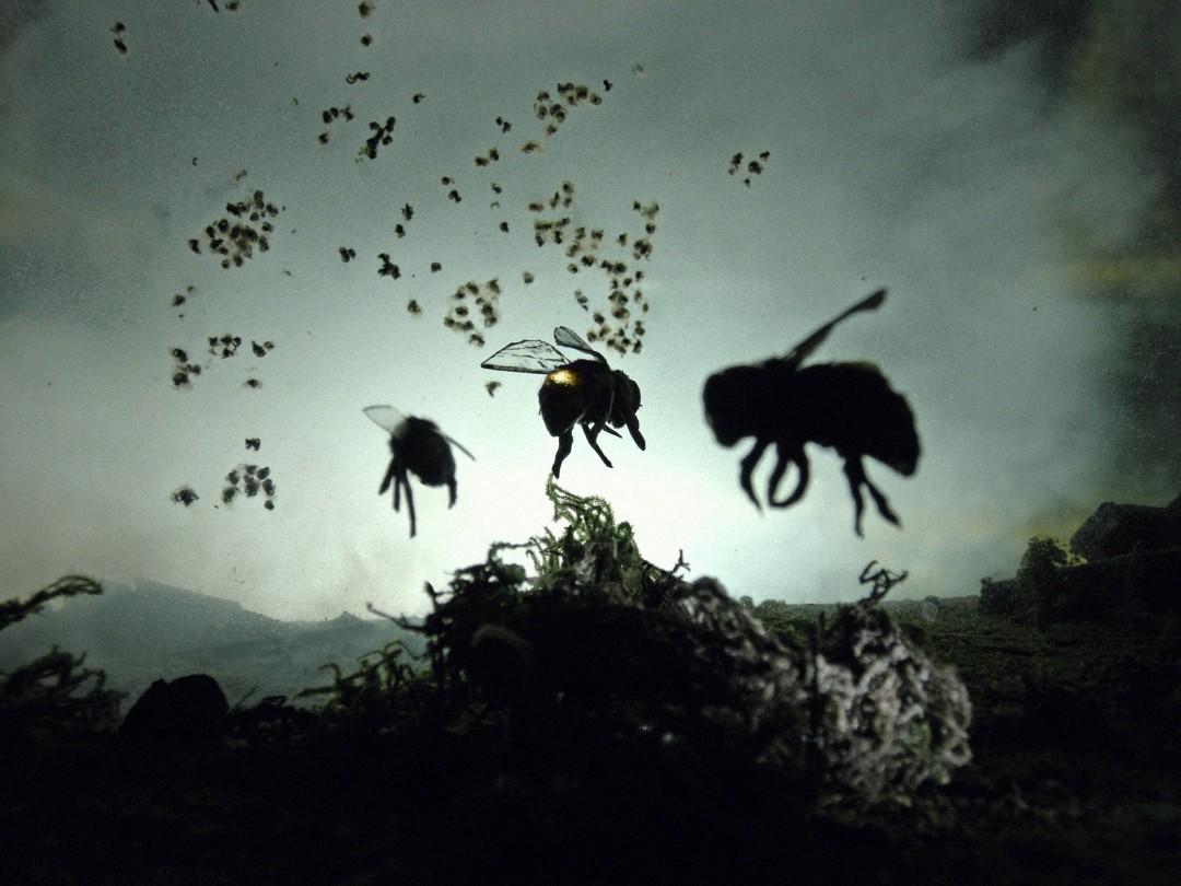 Adam Makarenko, 3 bee prototypes, 8 x 10