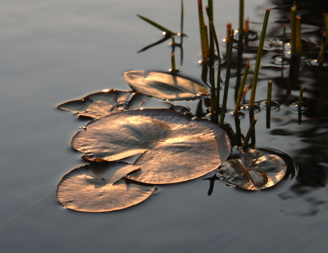 Ingrid Saaliste, </span><span><em>Marsh Gold, 2006</em>, </span><span>Digital photograph, 26