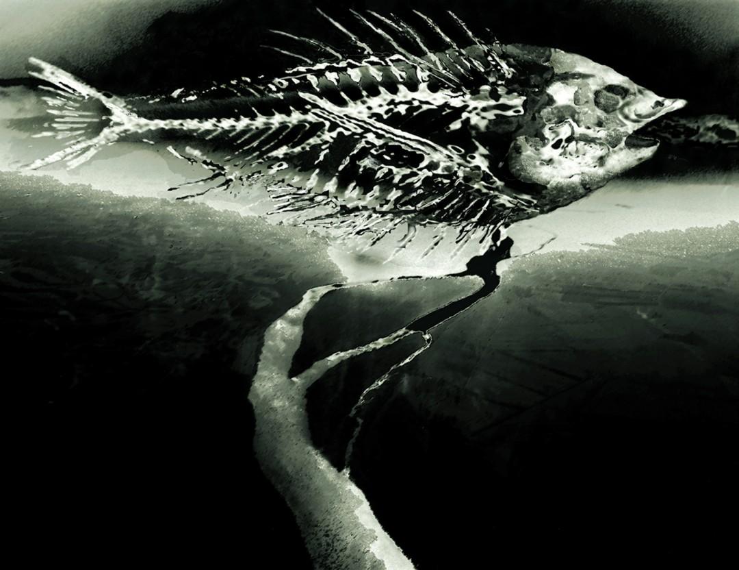 Susan Collacott, </span><span><em>Smiling Ocean Ghost</em>, </span><span>Digital print, 18 x 22