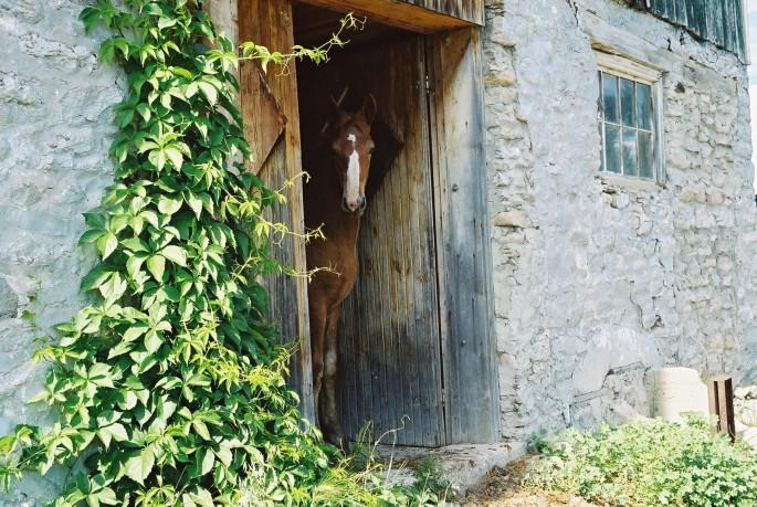 Cece Scott, </span><span><em>Horse, 2006</em>