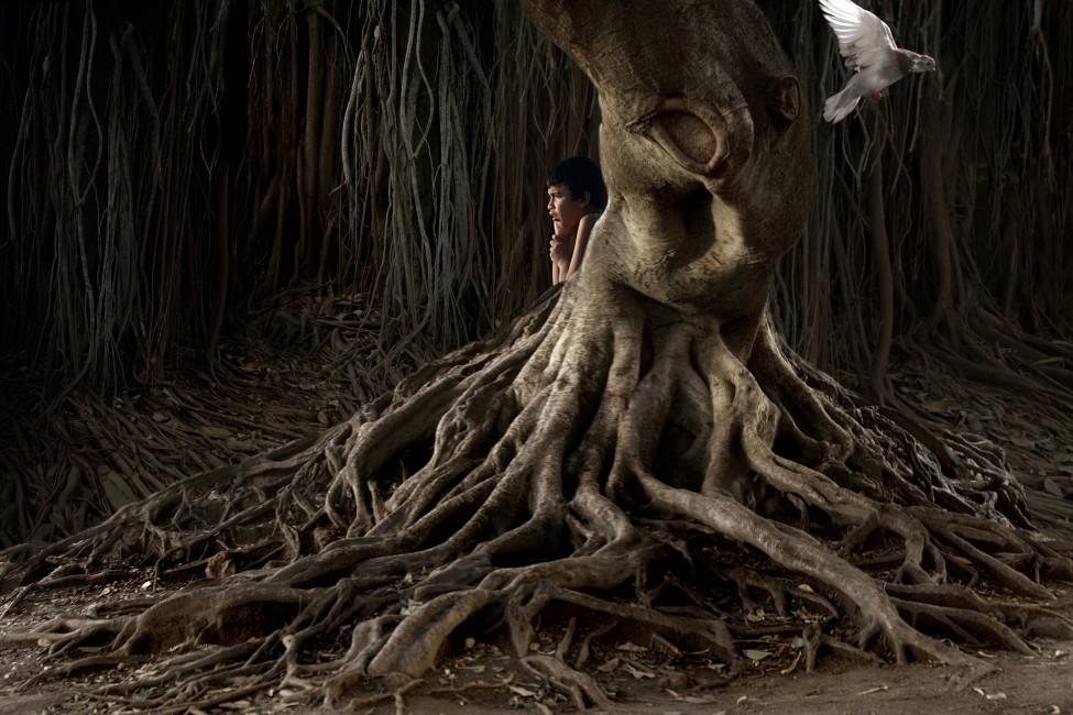 Kerry Shaw, </span><span><em>Tree Pigeon, 2006</em>, </span><span>,   x