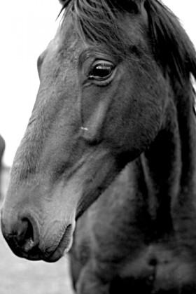 Stephanie Palmer, </span><span><em>The Lonely Horse</em>, </span><span>Black and White Photograph