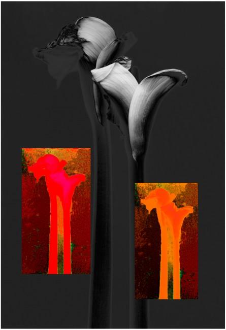 tatiana s., </span><span><em>calas</em>, </span><span>pigment print on watercolour paper,  13 x19