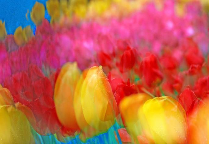 Kye Marshall, </span><span><em>Fleurish1, 2007</em>, </span><span>Archival Digital, C-Print  10 x 12 Framed