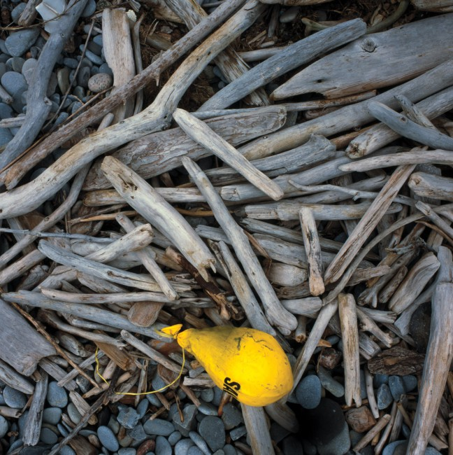 Bruce Livingston, </span><span><em>untitled 20 from Beach Debris: balloons and strings, 2008</em>, </span><span>archival inkjet print,  19.5 x 19.5 inches