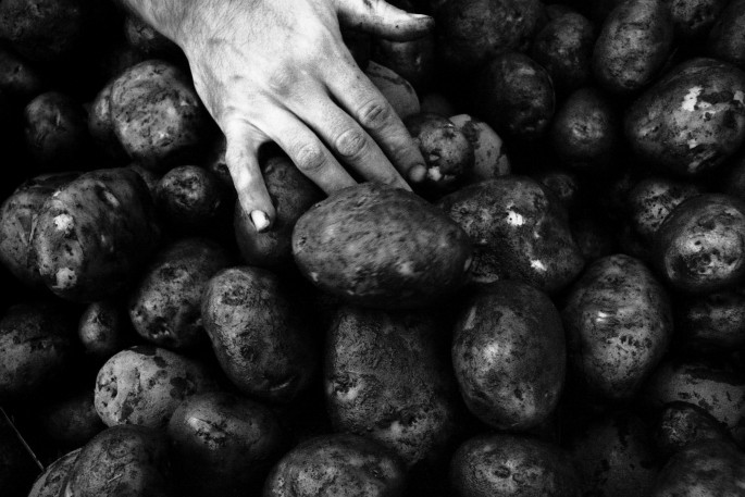 Jonathan Taggart, </span><span><em>&lt;I&gt;Sorting Blighted Potatoes after Rainfall, Whole Village, Ontario. 2008</em>, </span><span>Gelatin Silver print,   13 x 20 inches