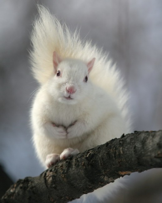 Michael Werner, </span><span><em>White Squirrel, 2008</em>
