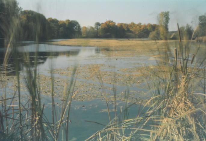 Edie Steiner, </span><span><em>Black River</em>, </span><span>2009
