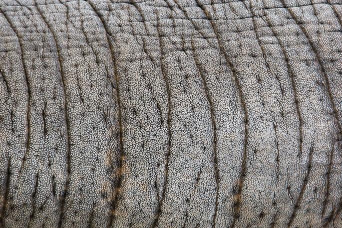 Brent Lewin, </span><span><em>Street Elephant Cola, Age 24</em>, </span><span>2009