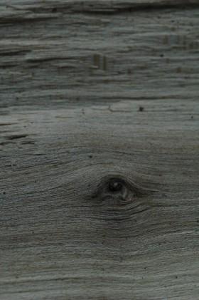 Mark Tearle, </span><span><em>Maple Eye</em>, </span><span>2009