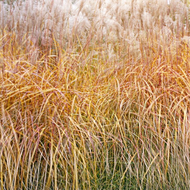 Ana Kapodistria, </span><span><em>Tall Grass</em>, </span><span>2009 © A.Kapodistria