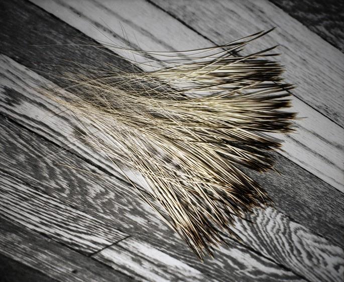 Jeffrey Berman, </span><span><em>Whiskers</em>, </span><span>2009  © Jeffrey Berman 2009