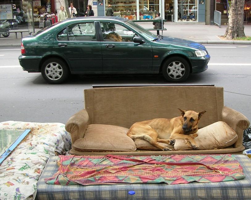 Shauna MacDonald, </span><span><em>Sofa Dog</em>, </span><span>