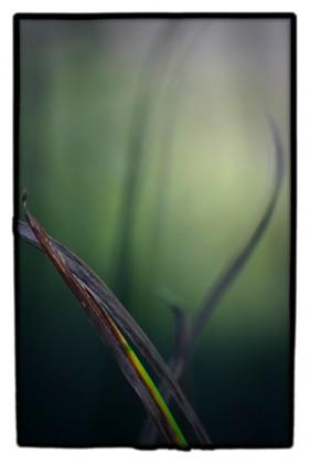 Carl Snyder, </span><span><em>Swamp Grass</em>, </span><span>2007