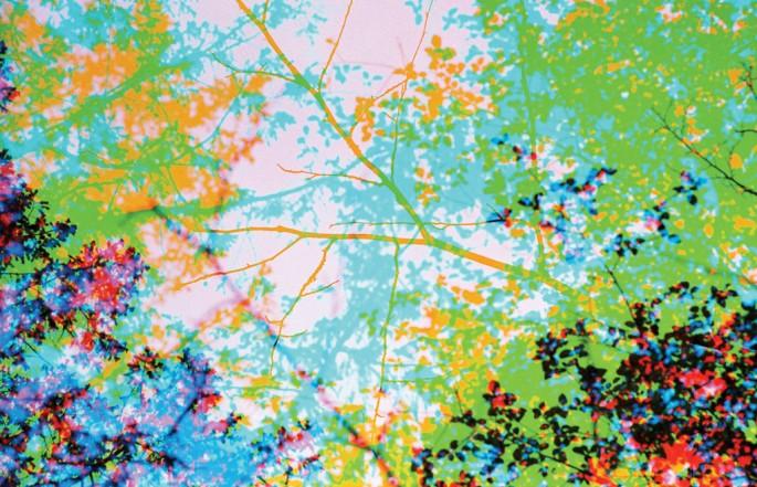 Jessica Eaton, </span><span><em>RGB Trees (Hornby Island)</em>, </span><span>2004 Courtesy of Clint Roenisch Gallery, Toronto