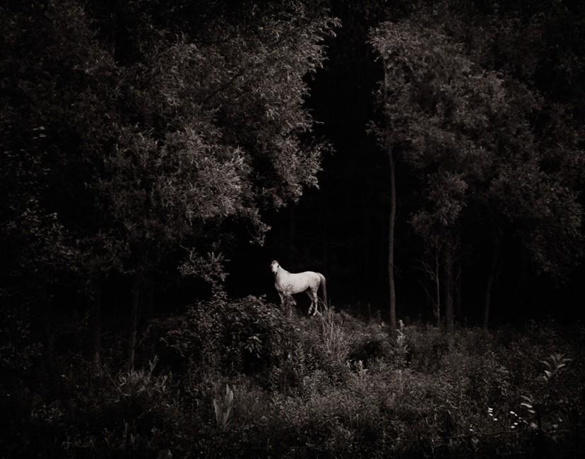 Ryan Szulc, </span><span><em>White Horse</em>, </span><span>2005