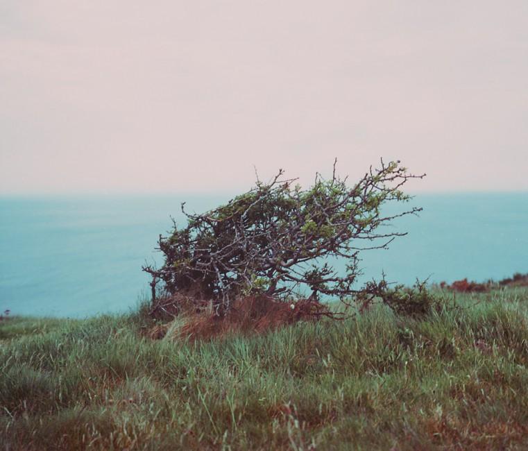 Matthew Tammaro, </span><span><em>Bush on a cliff, Aberystwyth</em>, </span><span>2011