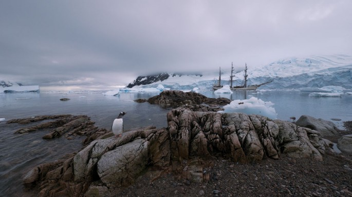 Victoria Piersig, Penguin and Bark Europa, 2011