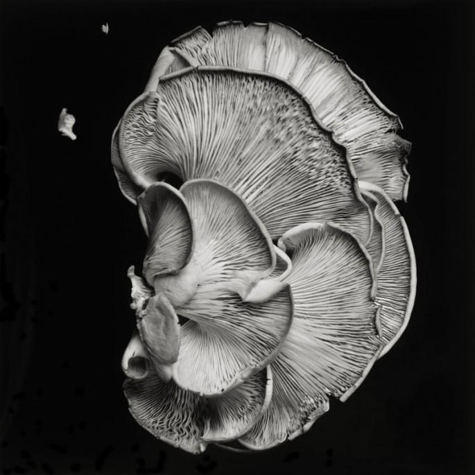Dale M Reid, Oyster Mushroom 1, 2011