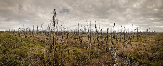 Matthew Plexman, </span><span><em>Yukon black Spruce 1</em>, </span><span>2010