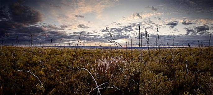 Matthew Plexman, </span><span><em>Yukon Black Spruce 3</em>, </span><span>2010