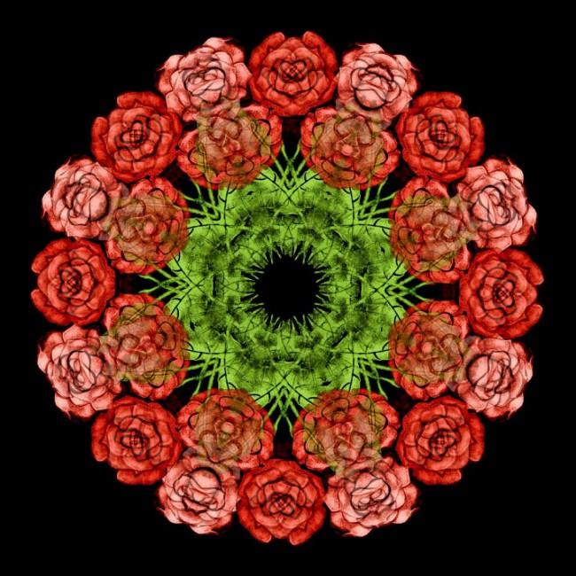 Paul Cook, </span><span><em>Rose</em>, </span><span>2012