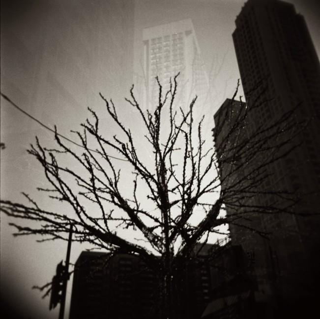 Aleksandra Krilic, </span><span><em>City Tree</em>, </span><span>2012
