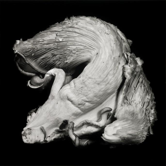 Dale M. Reid, </span><span><em>Oyster Mushroom #4</em>, </span><span>2012