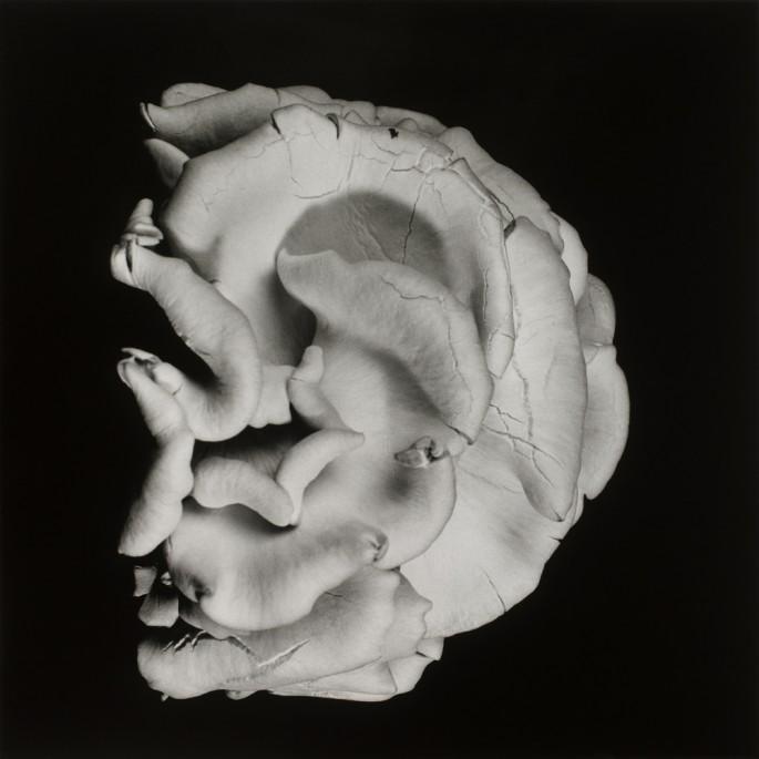 Dale M. Reid, </span><span><em>Oyster Mushroom #2</em>, </span><span>2012