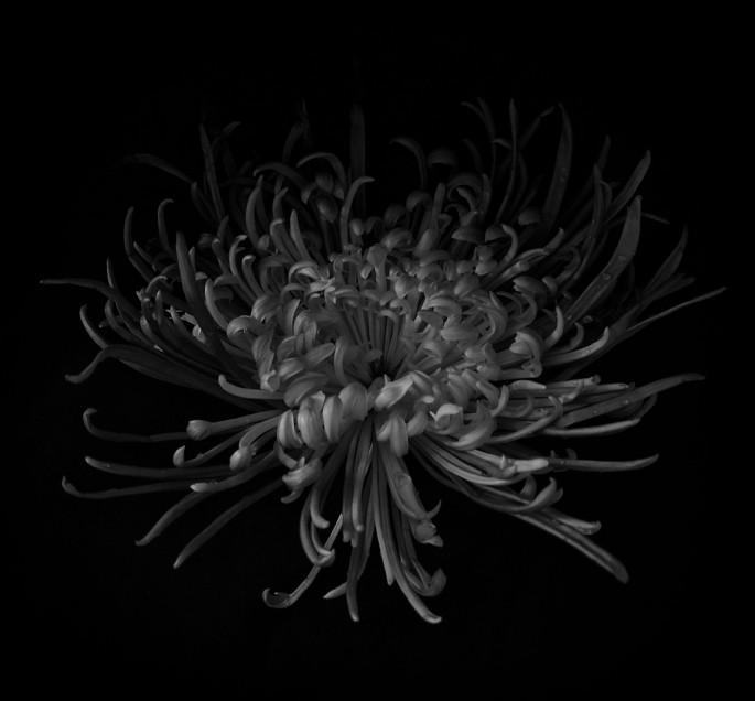 Patrick Lee, </span><span><em>Untitled</em>, </span><span>2012