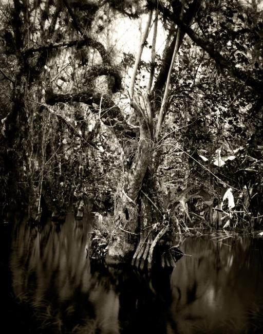Alain Lefort, </span><span><em>Florida Trail IV</em>, </span><span>2012