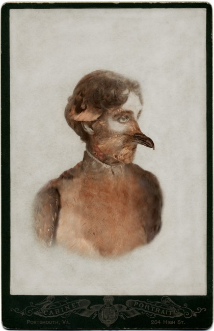 Sara Angelucci, </span><span><em>Aviary (Female Passenger Pigeon/extinct)</em>, </span><span>2013