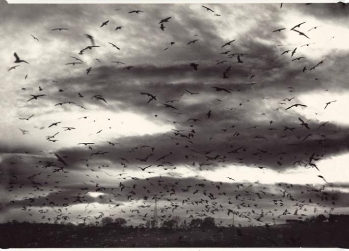 Mario Giacomelli (Italian), </span><span><em>Migrating birds in flight</em>, </span><span>c1980 Courtesy of Archive of Modern Conflict, London