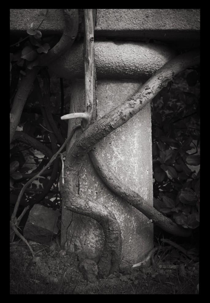 Rafael Goldchain , </span><span><em>Column and Vines</em>, </span><span>2010