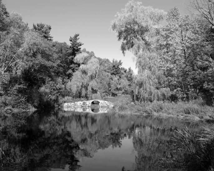Fred Palik, </span><span><em>The pond</em>, </span><span>2008