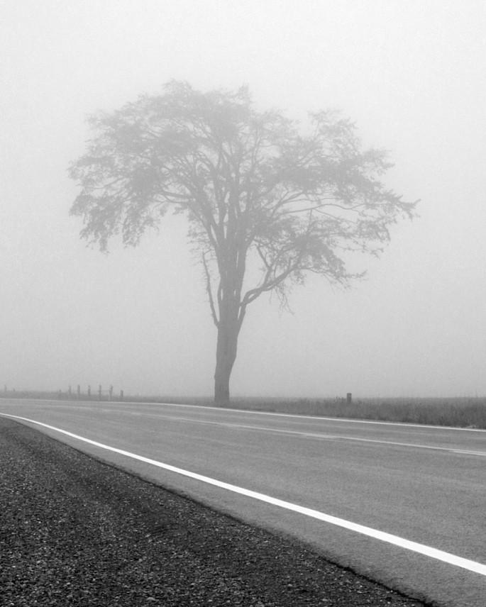Fred Palik, </span><span><em>Autumn fog</em>, </span><span>2005