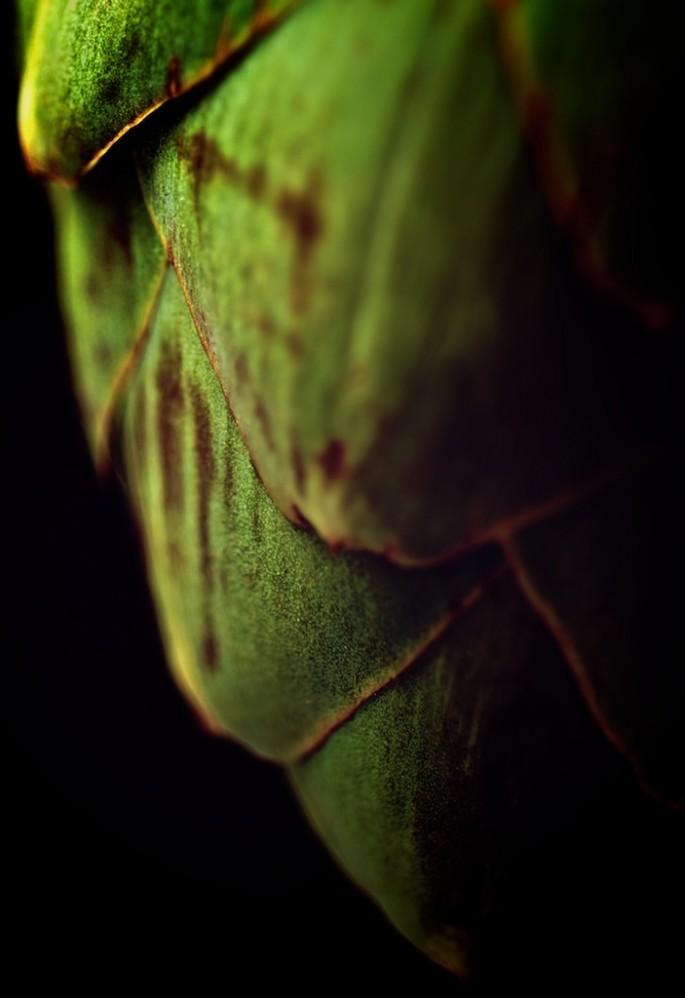 Copyright © Louis Au, </span><span><em>Artichoke</em>, </span><span>2013