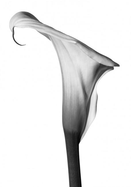 Myron Zabol, </span><span><em>Lily #1</em>, </span><span>2002