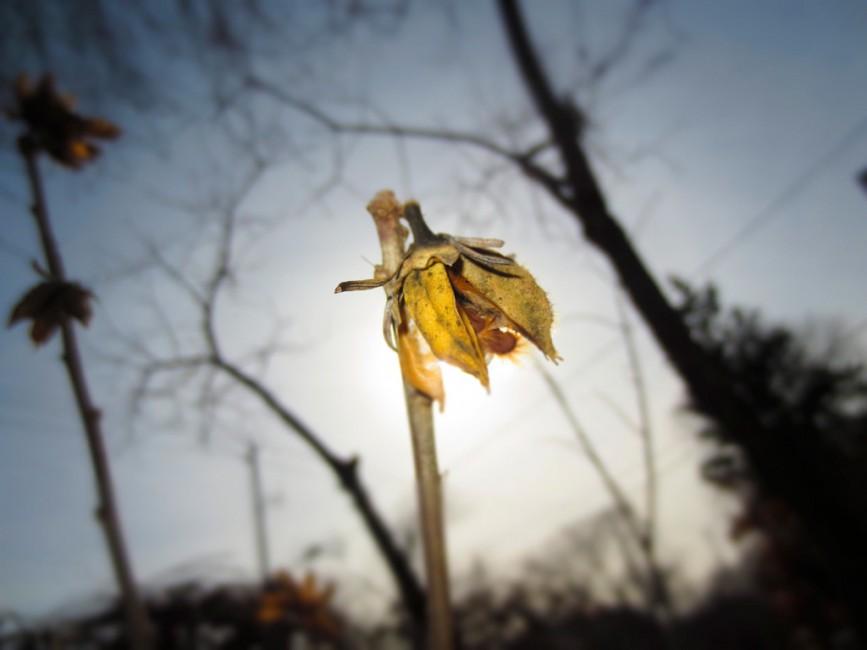 Avita (PCI Student), </span><span><em>A Lifeless Flower</em>, </span><span>2013