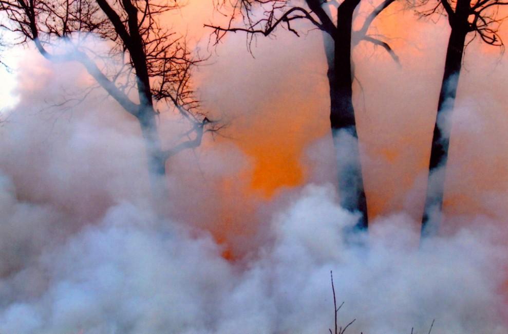 Frances Patella, </span><span><em>High Park Burn</em>, </span><span>2014