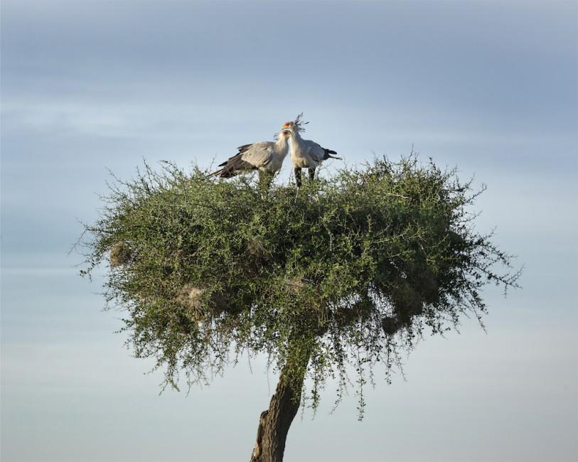 Roberta Bondar, </span><span><em>Secretary Birds</em>, </span><span>2013