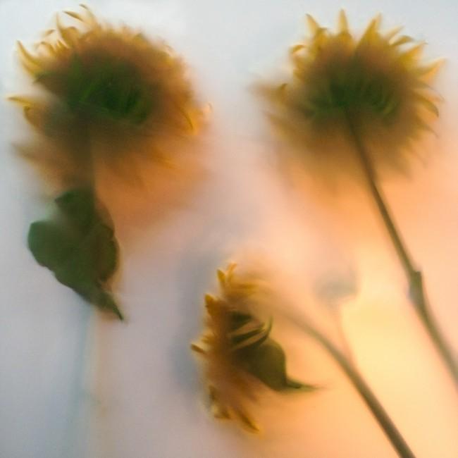 Gayle Saunders, </span><span><em>Summer 01</em>, </span><span>2014